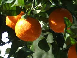 images Occupi Cyprus Orange n   images
